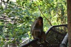 猴子看照相机 图库摄影