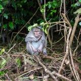猴子窃贼从游人的女用披肩点 免版税库存图片