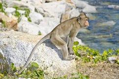 猴子第一 免版税图库摄影