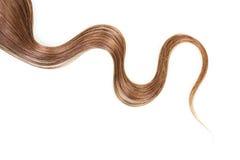 子线长期,在白色背景隔绝的卷曲,棕色头发 免版税库存照片