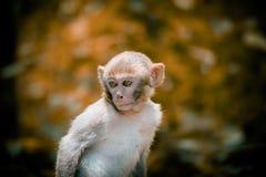 猴子野生生物 免版税库存照片
