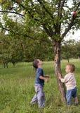 子项在苹果园 免版税库存照片