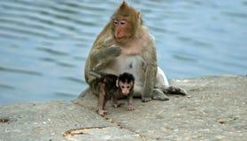 子项胡闹母亲罗猴 免版税库存照片