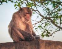 猴子,泰国 免版税图库摄影