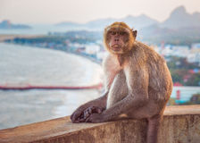 猴子,泰国 免版税库存图片