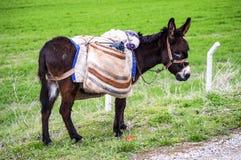 驴子,驴,牧羊人` s驴子,运载装载,黑貂驴,黑驴,和蔼可亲的驴子的美丽的货物的图片,美丽 库存照片