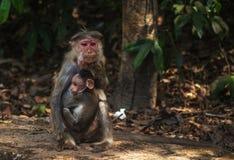 猴子婴孩和母亲 免版税库存照片