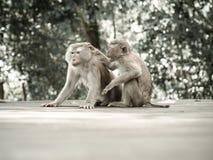 猴子画象 免版税库存图片