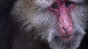 猴子 影视素材