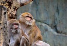 猴子 免版税库存图片