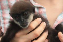 猴子崽 免版税库存照片