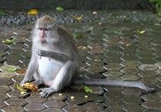 猴子034 免版税库存图片