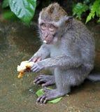 猴子032 库存照片