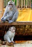猴子029 免版税库存图片