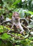 猴子028 免版税库存图片