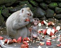 猴子024 免版税库存图片