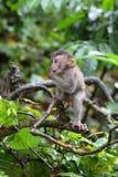 猴子021 免版税库存图片