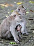 猴子020 免版税库存图片
