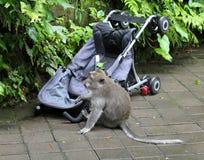 猴子017 免版税图库摄影