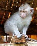 猴子016 免版税库存照片