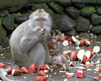 猴子014 库存照片