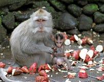 猴子012 库存照片