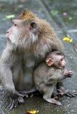 猴子011 库存图片