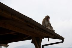 猴子 库存图片