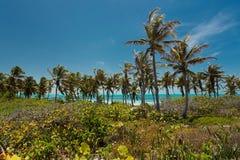 孔托伊岛在墨西哥 免版税库存图片