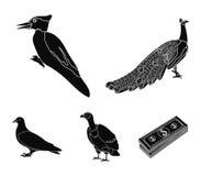 孔雀、啄木鸟和各种各样的种类 鸟设置了在黑样式传染媒介标志股票例证网的汇集象 库存图片