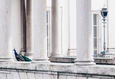 孔雀在Lazienki或皇家浴在华沙停放在波兰 库存图片