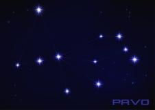 孔雀座星座 库存照片