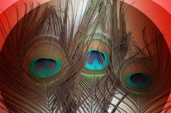 孔雀生有抽象传染媒介多彩多姿的被遮蔽的背景 也corel凹道例证向量 向量例证