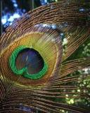 孔雀羽毛呈虹彩特写镜头宏指令 库存照片