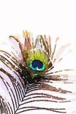 孔雀羽毛的水彩 免版税库存照片