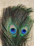 孔雀羽毛眼睛 免版税库存图片