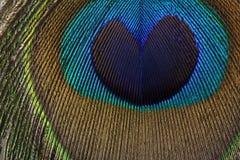 孔雀羽毛-心脏 免版税图库摄影