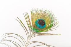 孔雀羽毛-蓝眼睛在末端 免版税图库摄影