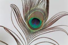 孔雀羽毛 免版税图库摄影