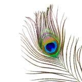 孔雀羽毛 库存照片