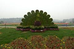 孔雀草雕塑在植物园里 免版税库存照片