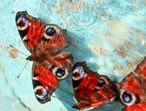 孔雀蝴蝶注视坐一朵木蓝色被绘的海浪 库存图片