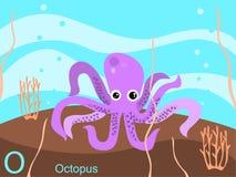 字母表动物看板卡闪光o章鱼 库存照片