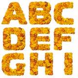 字母表flowe在橙黄色上写字 免版税库存图片