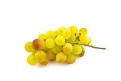 字符串成熟葡萄的麝香葡萄 图库摄影