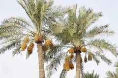 字符串日期约会kimri棕榈树 库存图片
