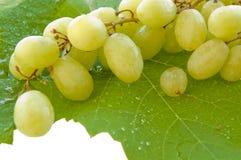 字符串葡萄叶子湿白色 免版税库存图片