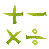 字符蕨绿色查出叶子标记 免版税图库摄影
