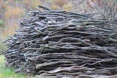 存储的木柴 库存图片