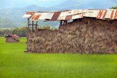 存贮的干草堆在米领域 堆干燥黄色秸杆 免版税库存图片